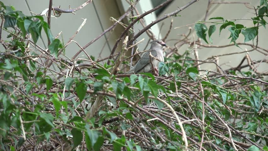 4K Cute tropical bird relax on tree branch, scratch plumage in exotic habitat by day | Shutterstock HD Video #25532837