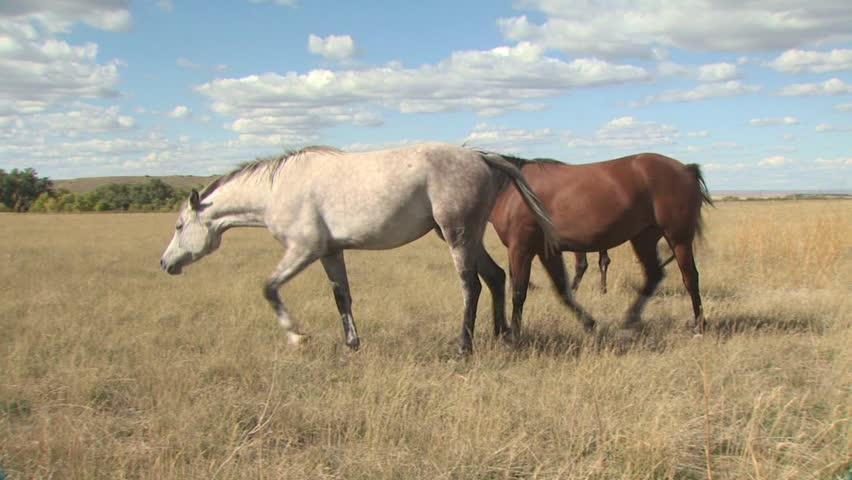Horses In A Field | Shutterstock HD Video #2582867