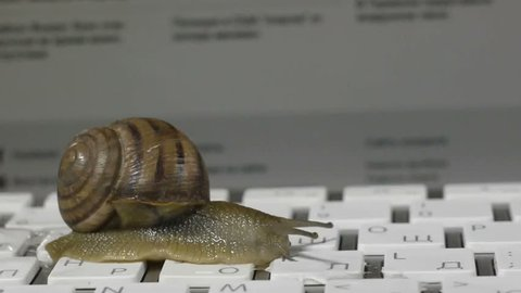 Snail slowly crawling on the computer keyboard. Low speed Internet