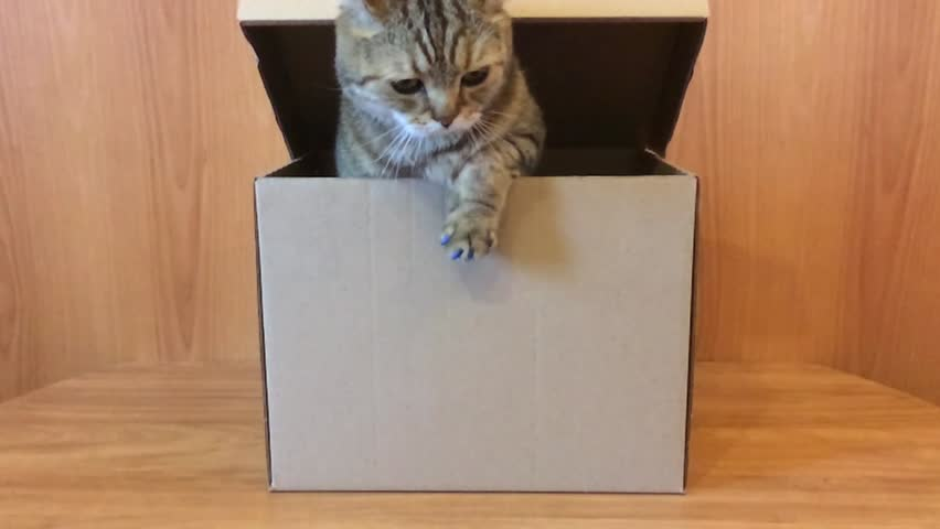 Cat gets out of the box | Shutterstock HD Video #26091977