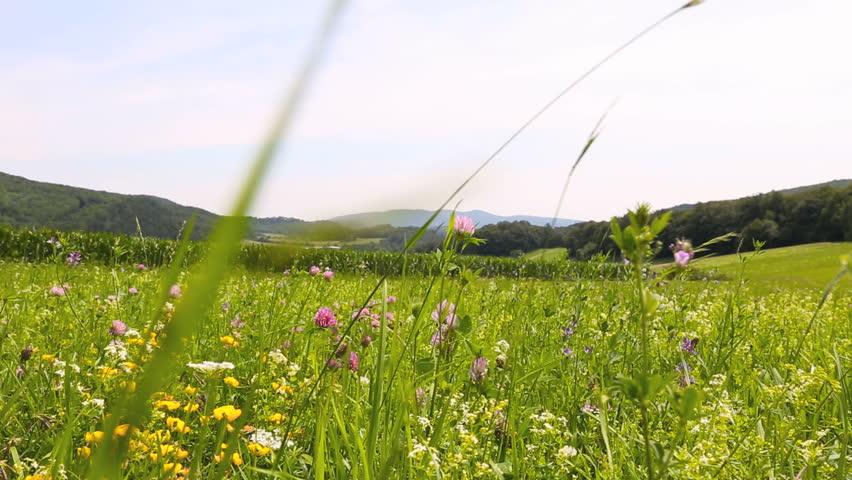 dolly shot summer meadow sideways wide
