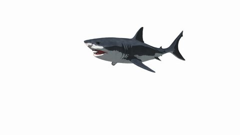 3D animation of the great white shark attack. Includes alpha channel and seamless loop. Most suitable for aquatic themed productions.
