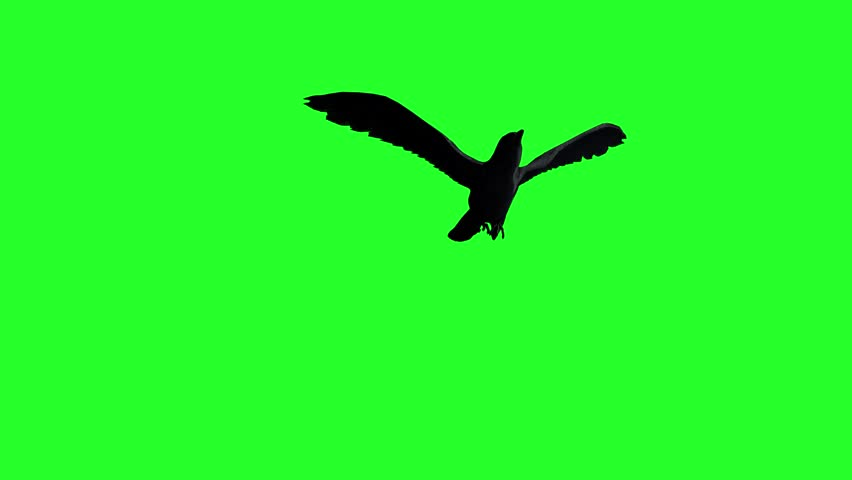 Crow Raven flying on a green background, 3D render | Shutterstock HD Video #26275487