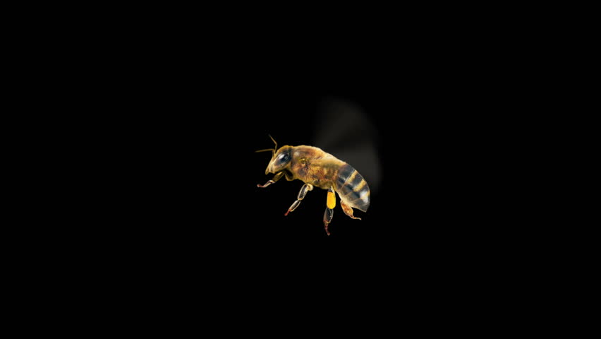 Flying Bee - Transparent Background