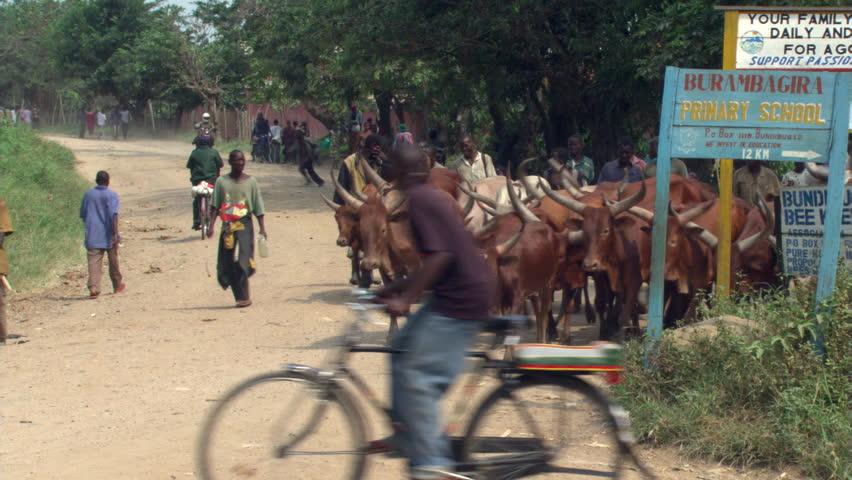 Header of fulani