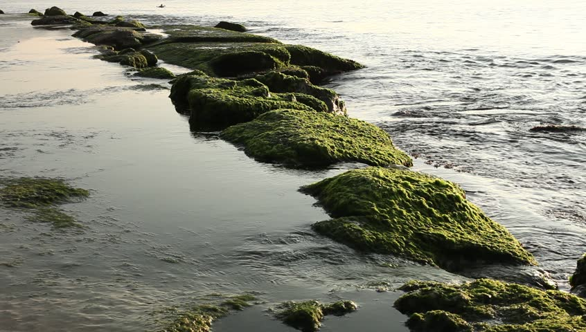 Shore of sea with green seaweed and mossy on stones in water. Top view of seascape. nha trang-vietnam | Shutterstock HD Video #26719717