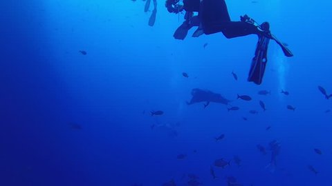 Incredible Giant Manta Rays of the Revillagigedo Islands, better known as Socorro Islands. Filmed at Roca Partida playing with scuba divers and their bubble trails (Latin name, Manta birostris)