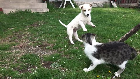 Slow motion epic fight between puppy and kitty in the garden 1920X1080 HD footage - Cat and little dog outdoor battle slow-mo 1080p FullHD video