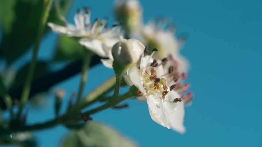 Header of mayflower