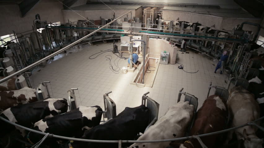Automated Dairy Farm