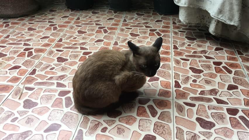 Cat Animal Background Kitten Beautiful Stock Footage Video 100