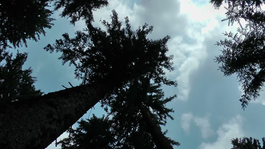 Time lapse clouds stock footage. An upward view of a tree top with time lapse motion clouds floating by.