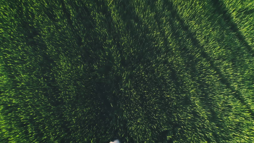 Woman And Dog In Green Fields Aerial View | Shutterstock HD Video #26939617