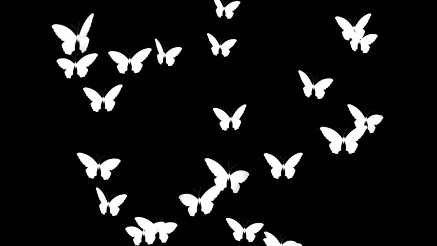 Many White Butterflies...