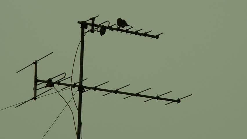 Bird Silhouette During Magic Hour Sunset. Flock Of Birds At ...