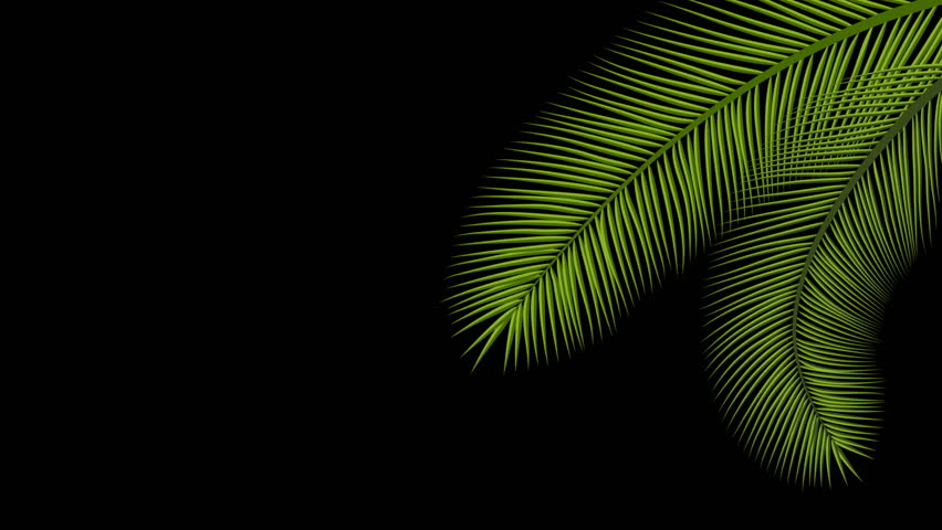 Animated palm tree leaves swaying by wind isolated in an alpha channel with black and white luminance matte, full size, perfect for film, digital composition.