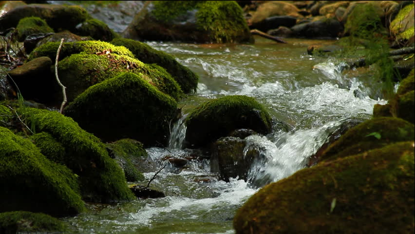 Clean fresh water of a forest stream running over mossy rocks