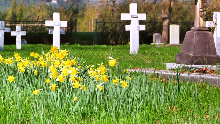 4K Cemetery Flowers, Funeral Grave, Spring Grass and Flowers