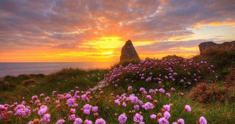 Sunset over standing stone with flowers in the foreground, 4K time lapse clip, High Dynamic Range Imaging
