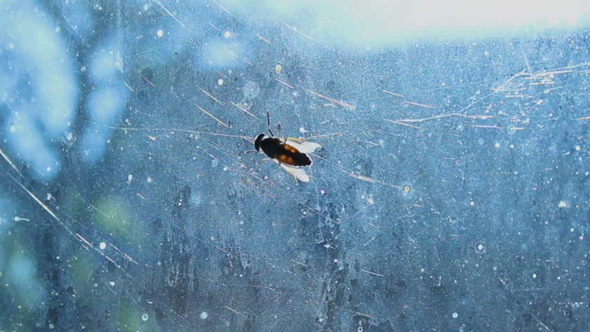Disgusting gadfly sitting on dirty glass, complete devastation and insanitary #27548047