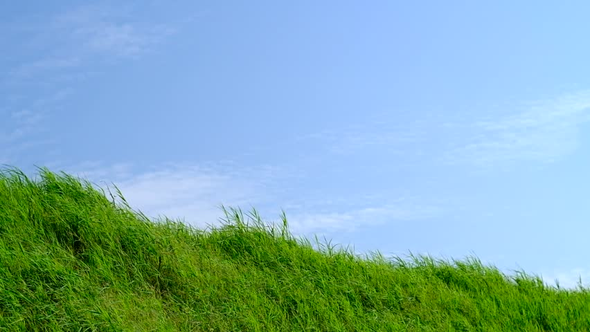 Grassland with Blue Sky in Stock Footage Video (100% Royalty-free) 27627247  | Shutterstock