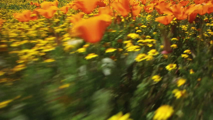 Flower Field Bugs Eye View 14 Poppy 3 Axis Gimbal Stabilizer #27635110