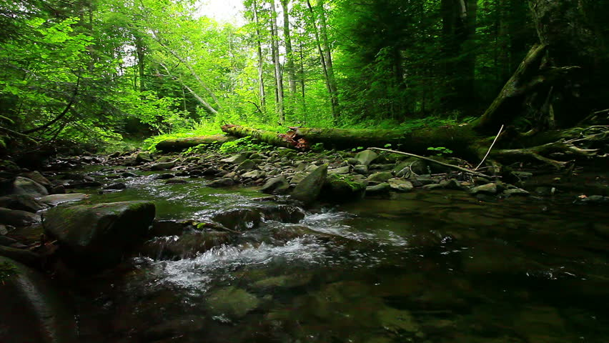 mountain stream in the forest #2768180
