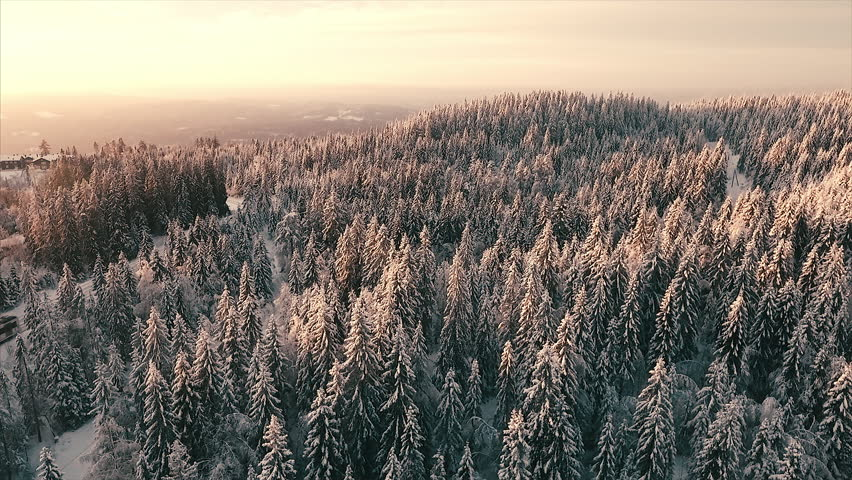 Aerial view over a winter pine forest during sunset