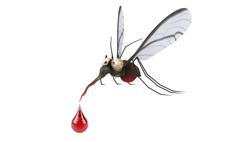 Image result for shutterstock mosquito