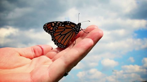 A monarch butterfly in a man's hand.