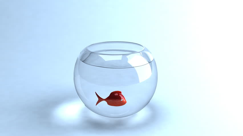 Fish jumping out of a bowl