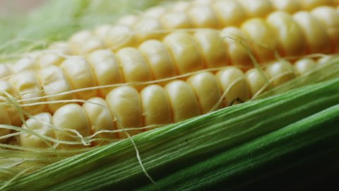 Ripe ear of young corn wrapped in green leaves. Macro, shooting with dolly