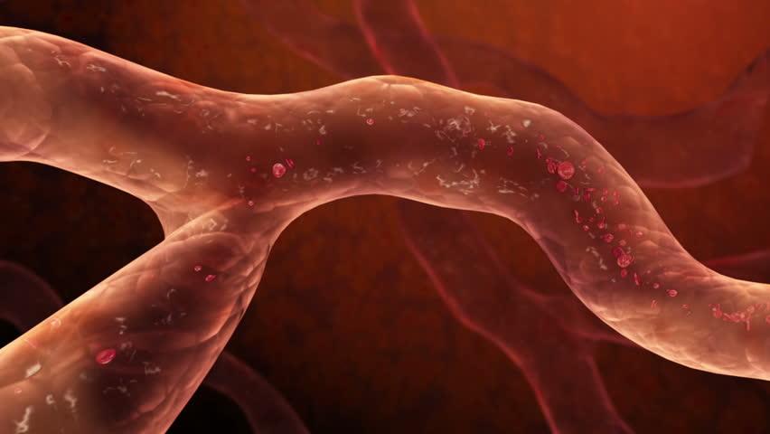 Blood Cells Flow seamless loop