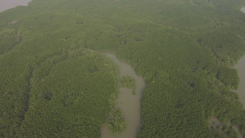 Aerial view of mangrove forest