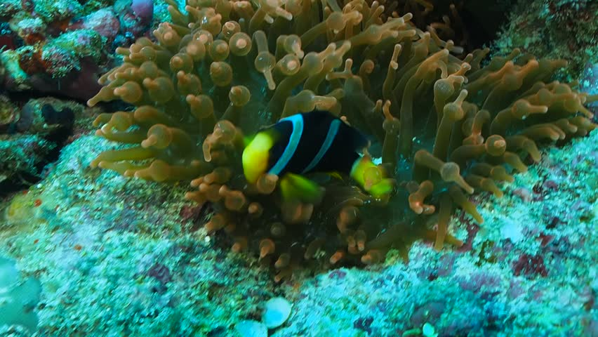 Header of anemone