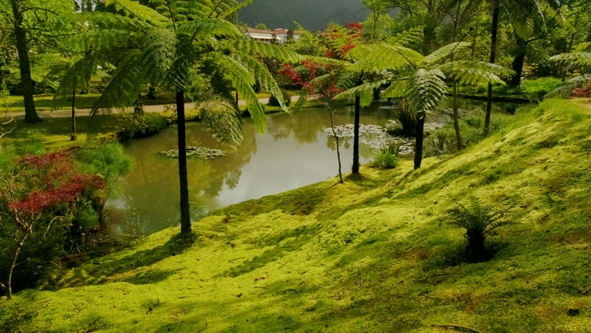 Giant ferns in the edenic Parque Terra Nostra park in Sao Miguel, The Azores, Portugal