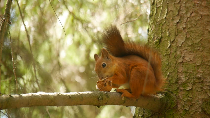 Squirrel on the tree.