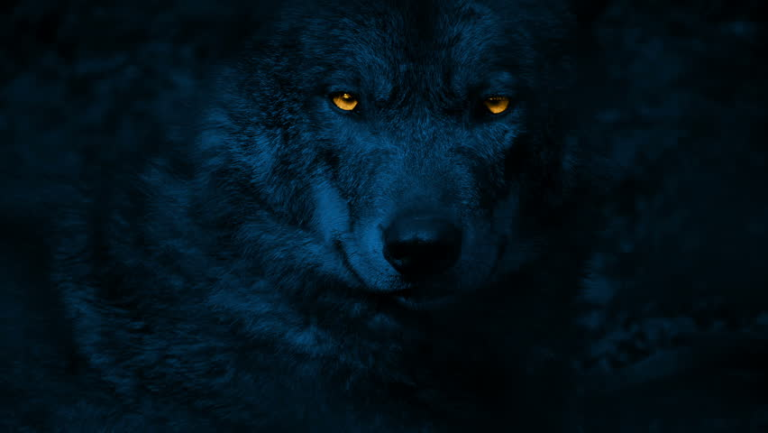 Wolf Growls With Glowing Eyes At Night