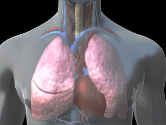3D visualisation of a thrombo-embolism at the level of a pulmonary alveolus within the human lung