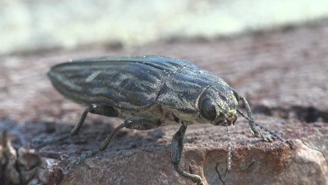 Borer Stock Video Footage - 4K and HD Video Clips | Shutterstock