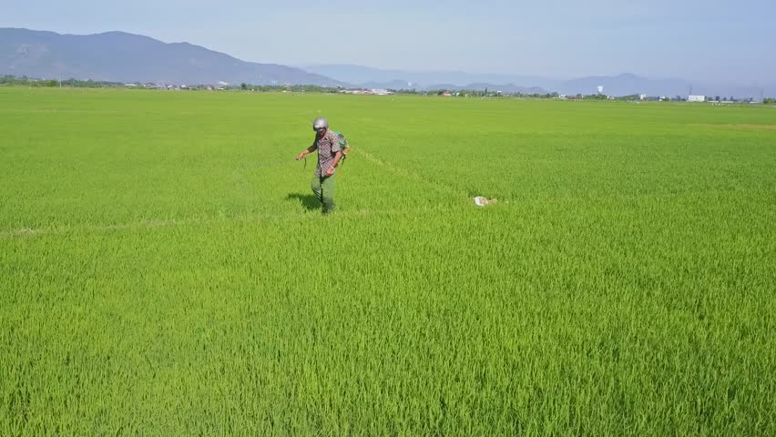 NHA TRANG, KHANH HOA/VIETNAM - JUNE 20 2017: Flycam removes from farmer sprinkling pesticide chemicals about vast rice fields against pictorial landscape on June 20 in Nha Trang