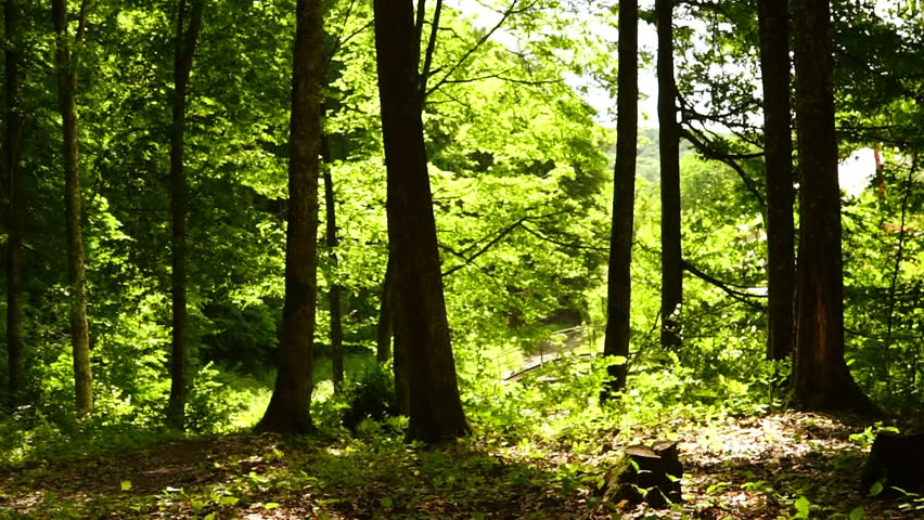 Forest in summer #28769587