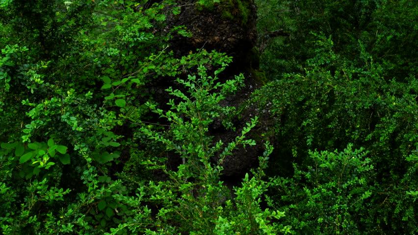 Portuguese Oak, Escuain gorge, Ordesa y Monte Perdido National Park, Huesca Province, Aragon, Spain, Europe | Shutterstock HD Video #28928116
