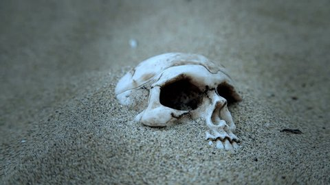 Human skull partially covered with sand