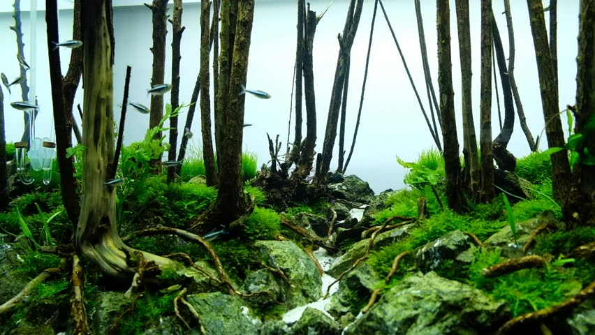 Aquascape Forest Style   HD Stock Video Clip