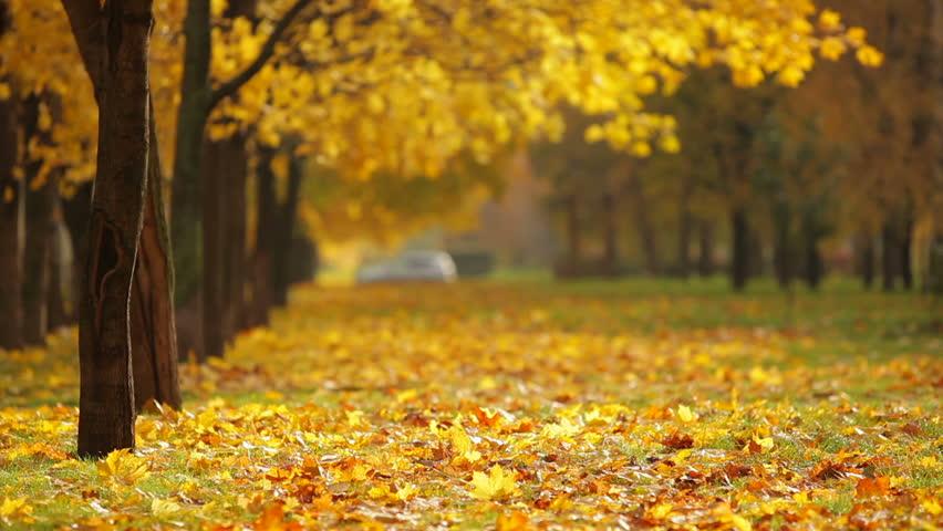 autumn city park #2911906