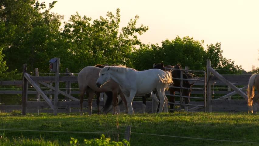 Header of barnyard
