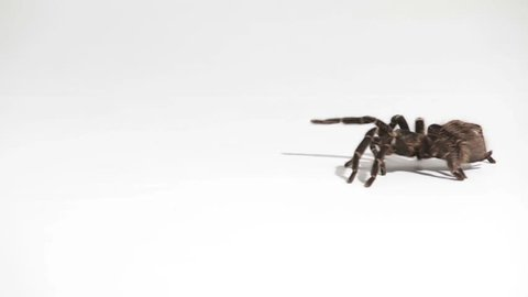 spider crawls through the picture on white background