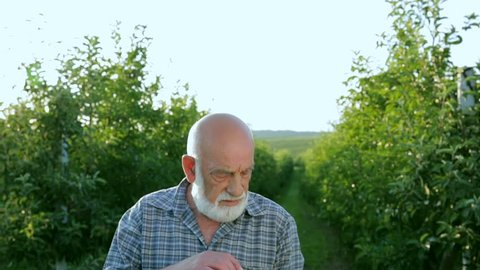 The farmer evaluates the red apple in his garden