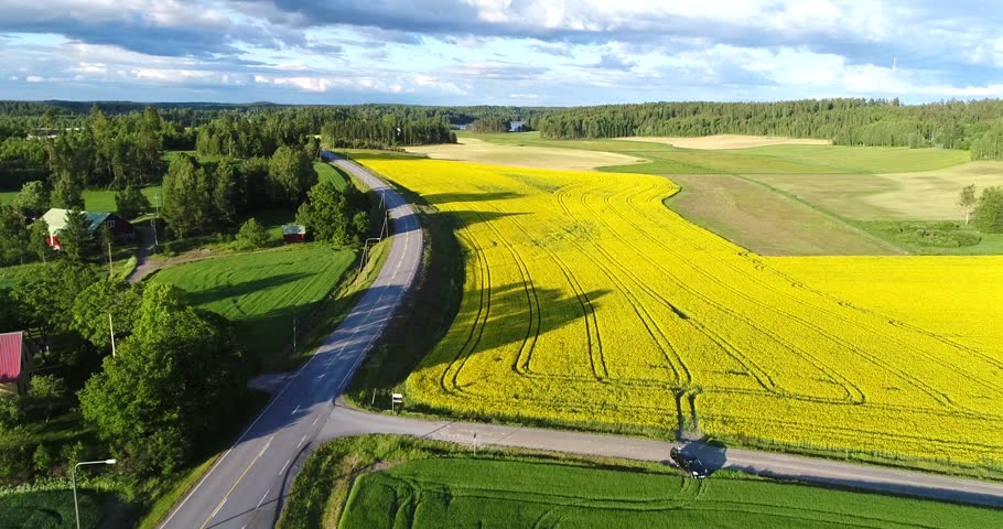 Road on countryside, Cinema 4k aerial view above a asphalt road, between yellow rapeseed fields and other green fields, at a evening, in Uusimaa, Finland